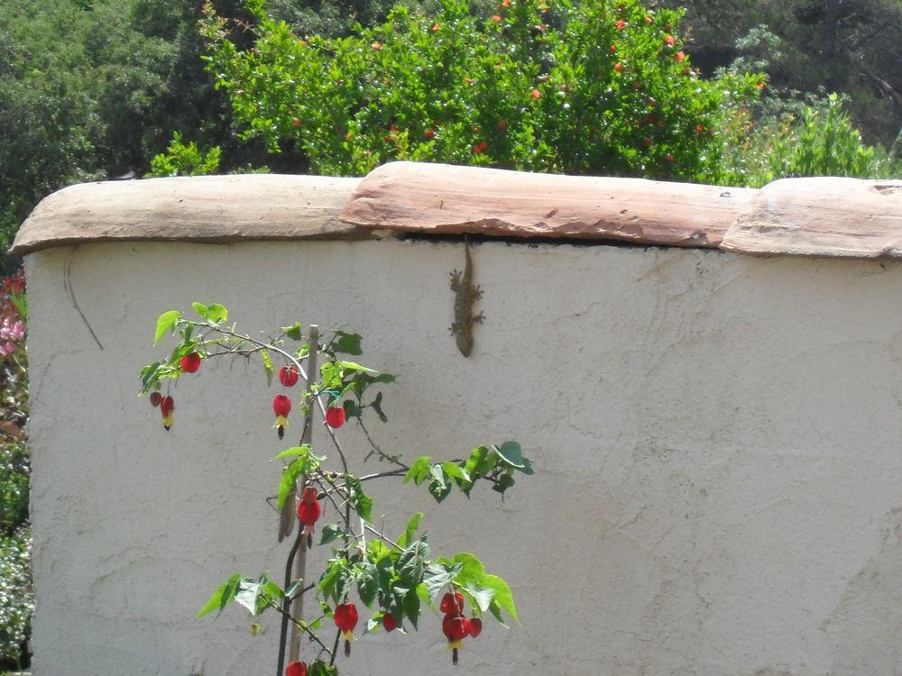 Copains de nos jardins 456514SAM1105