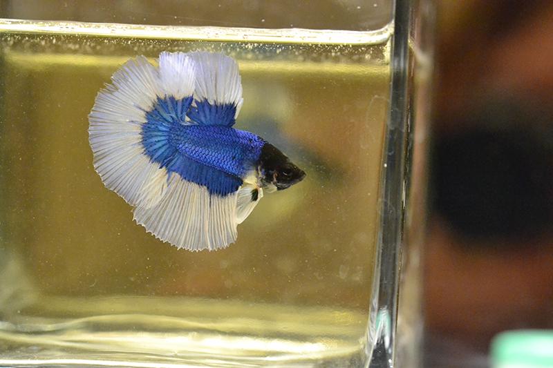 Un nouveau, BF bleu 457197DSC0764