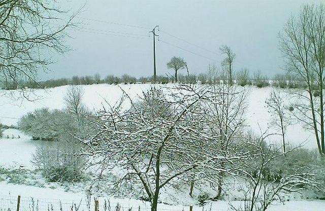 Mercredi 06 janvier 2010 - (Neige à Pont Farcy - 7 à 10 cm) 470481campeauxneige7