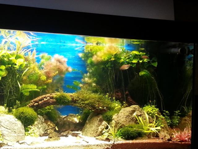 mon 240 L aquascaping 476039grosplandroitaquarium