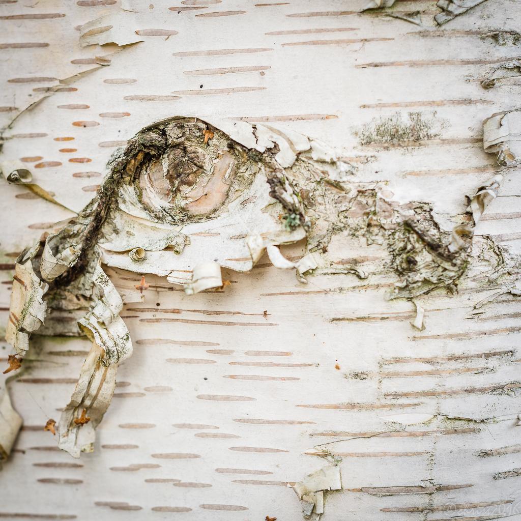 Ecorces d'arbres rares  476957DSC5600