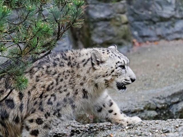 Le zoo de Bâle 484725ZooBleavril2012640x480023