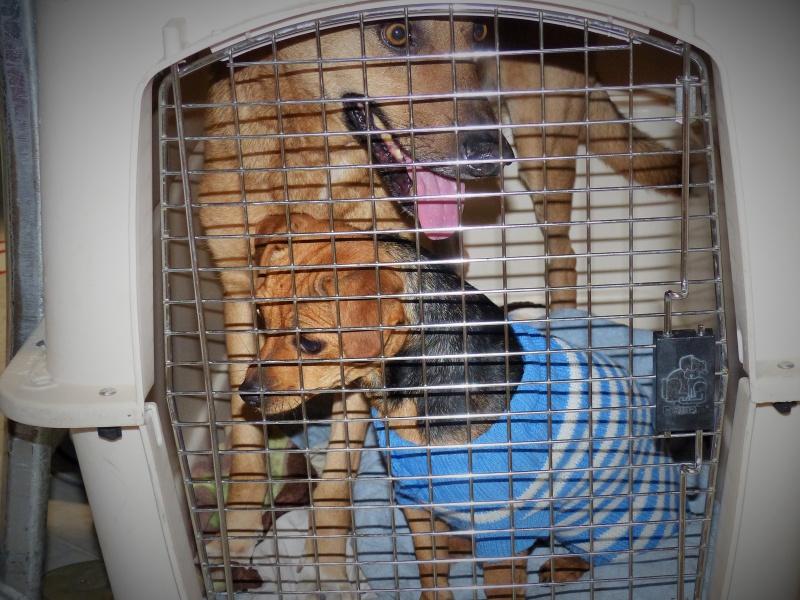 Tzupy, chien de notre quartier, mâle très sociable, né en 2009. 485862P1130165