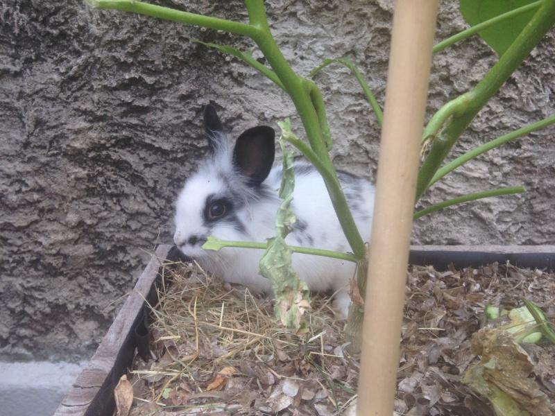 Le lapin des voisins... (maltraitance) 491480IMG0406