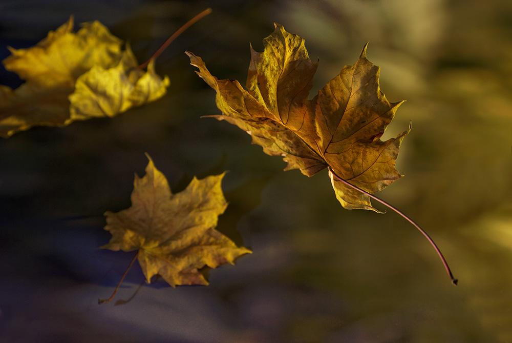Le bel automne est revenu. Forum de photo. Semaine 18/09/2017 au 24/09/2017 491727FeuilleSecondessai