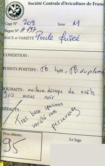 salon de l'Aviculture de Paris du 22/02/2014 au 02/03/214 - Page 4 501876P1130524