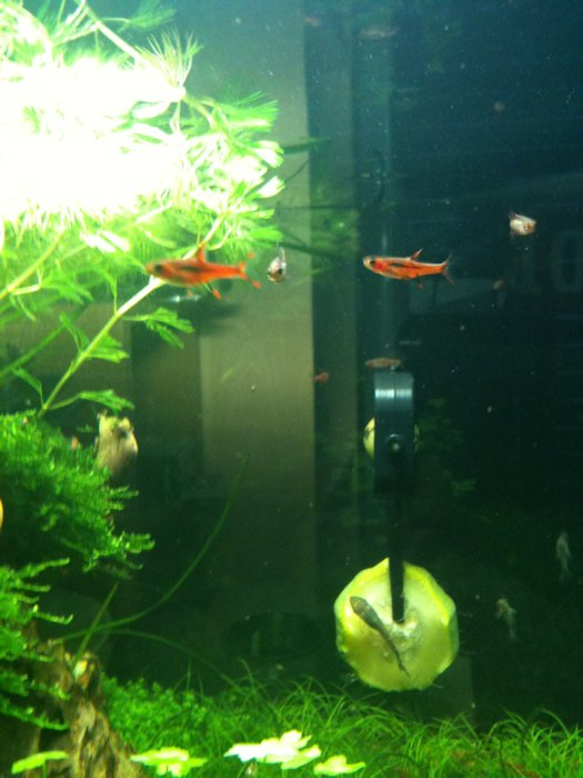 Mon Scaper's Tank 50L Aquascaping - Page 2 504374IMG0489