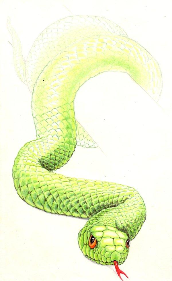 Chasse, piège et tétons qui pointent [PV Saru/Seiya/Lio] 505423serrrpent