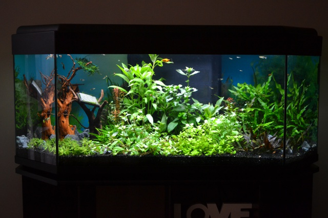 MES AQUARIUMS 240 L Communautaire et 30 L Aquascape + photos - Page 3 5067269011