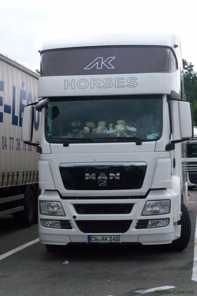 Transports de chevaux 508061photoscamions7VI11110Copier