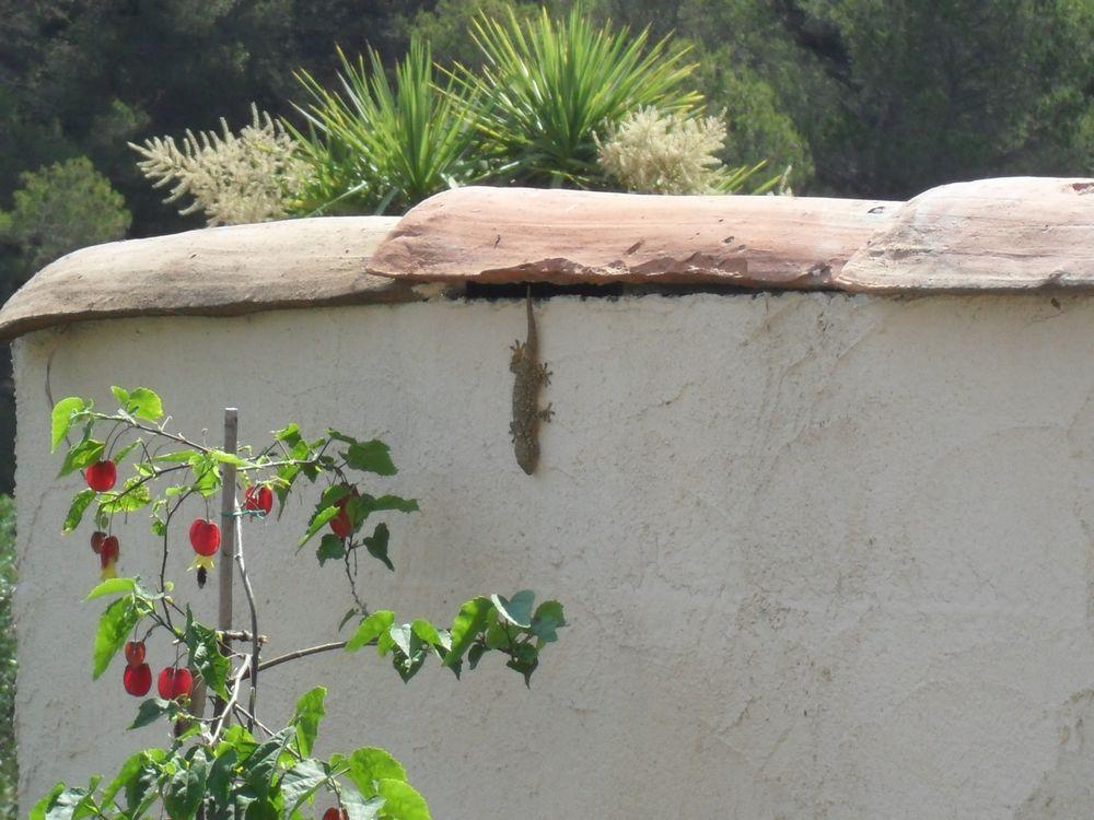 Copains de nos jardins 510261SAM1107