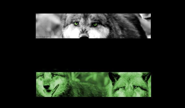 Chanson thème de votre loup! 511353Reavenfini