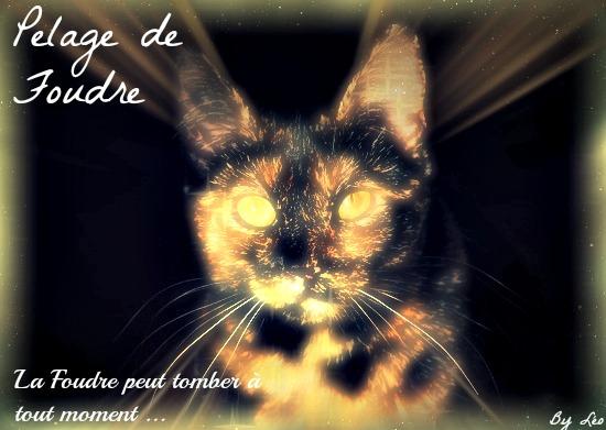 Pelage de Foudre 512432PelageDeFoudre