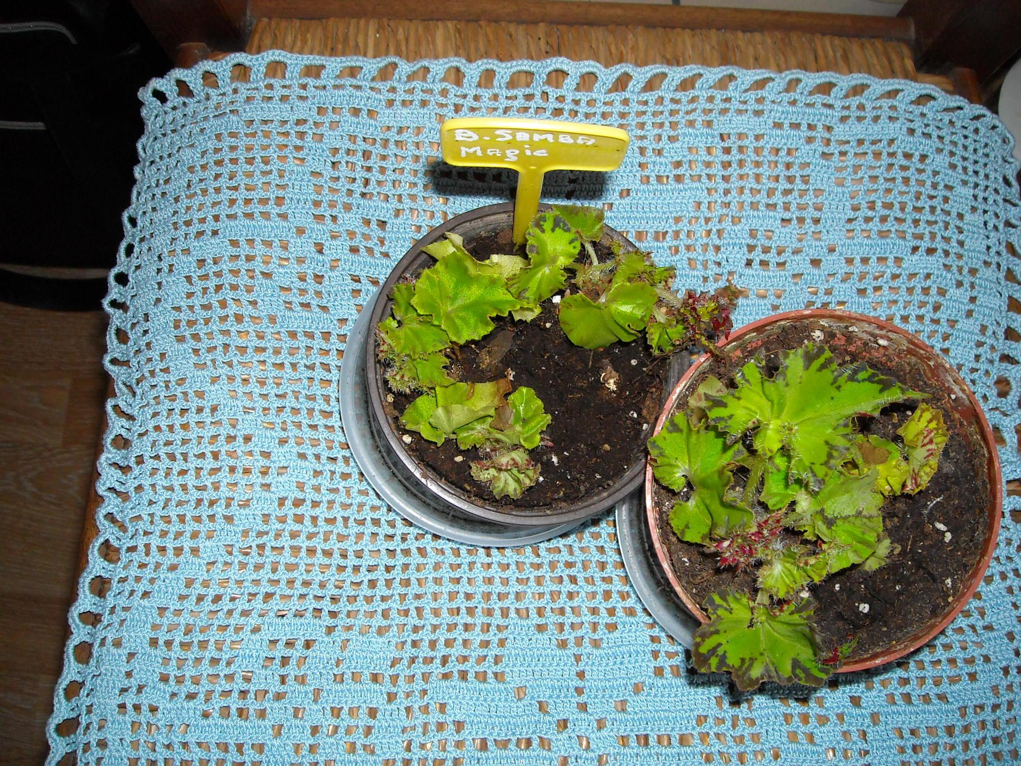 un aperçue de mon HLM 516951ensembledemesplantes010