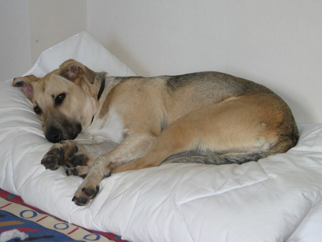Lila, adorable chienne croisée, née en octobre 2011 517174IMG9306