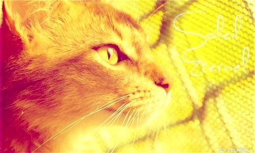 Galerie du Soleil ♪ 520063SoleilEternel