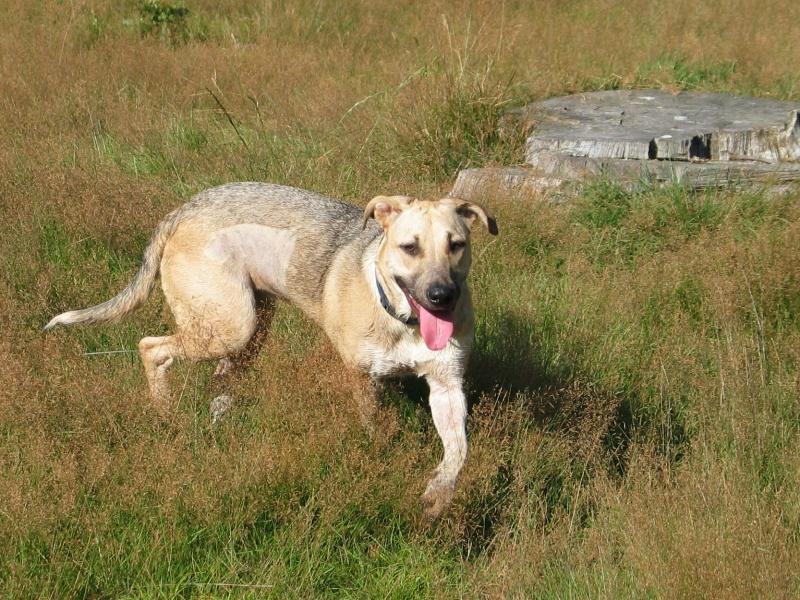 Lila, adorable chienne croisée, née en octobre 2011 521317IMG9507Copie