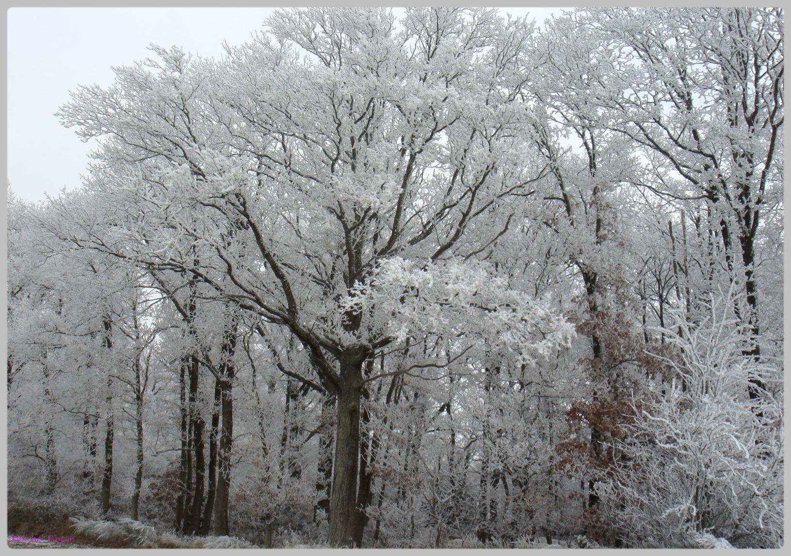 [fil ouvert] la forêt dans tous ses états - Page 11 526638DSC011782