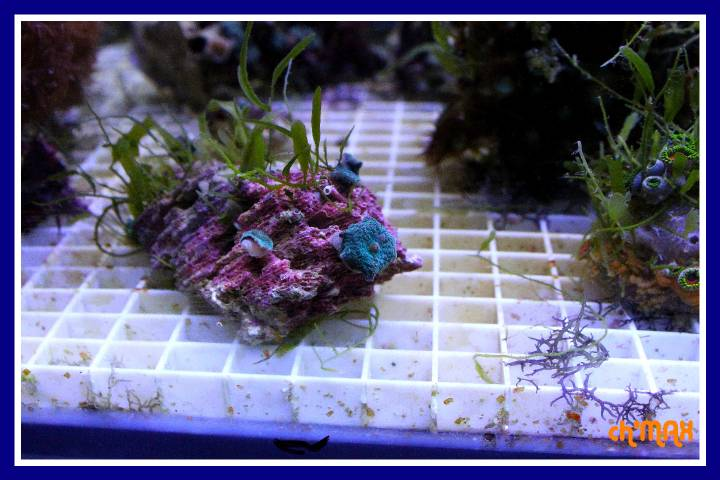ce que j'amène en coraux a orchie  530076PXRIMG0021GF