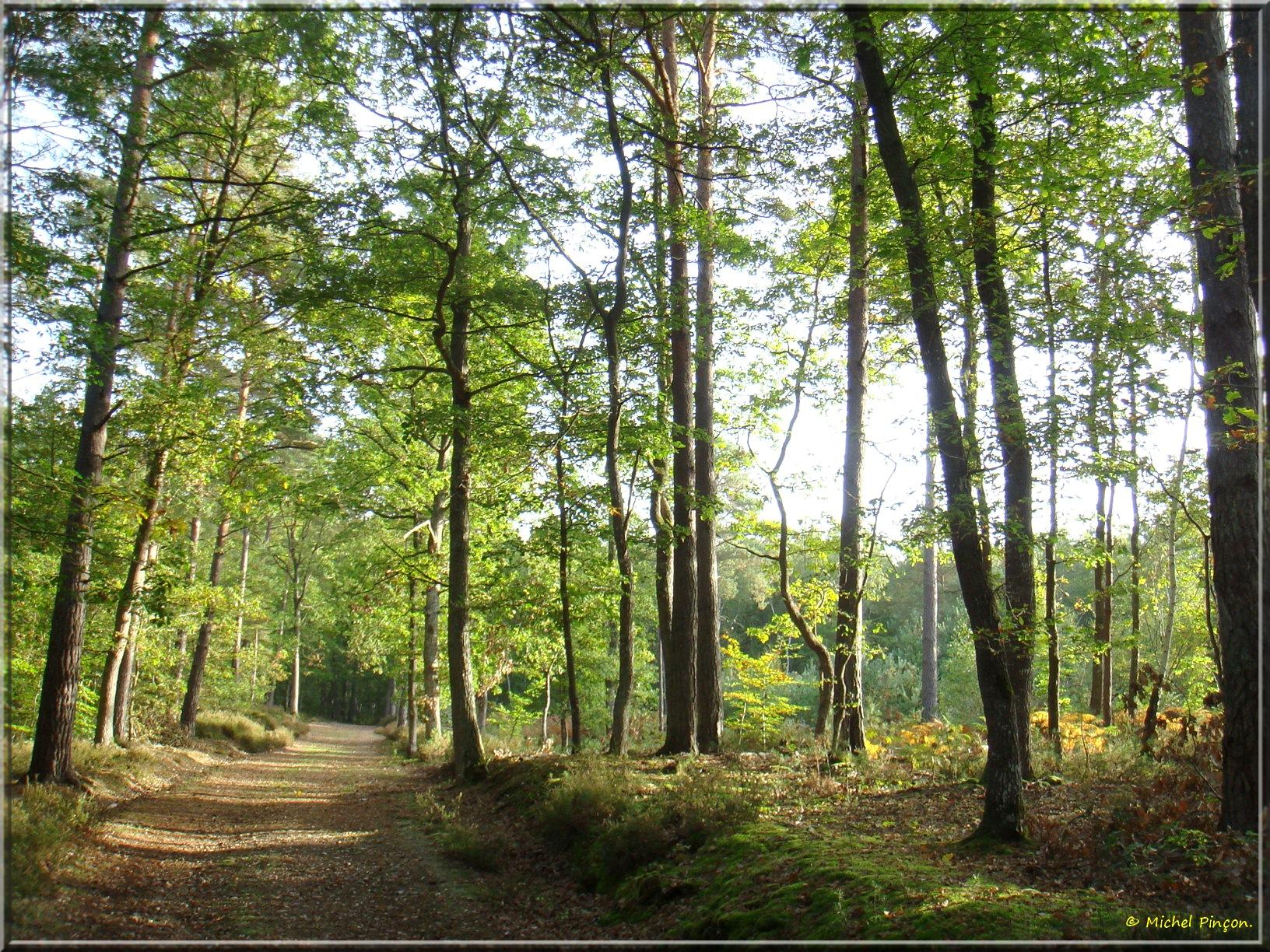 [fil ouvert] la forêt dans tous ses états - Page 14 533088DSC013906
