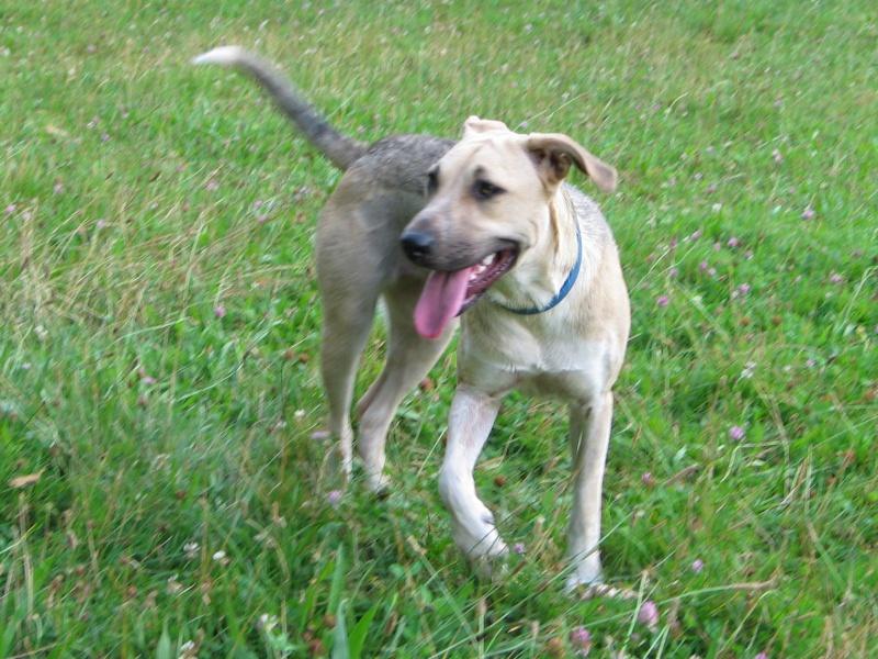 Lila, adorable chienne croisée, née en octobre 2011 535917IMG9584Copie