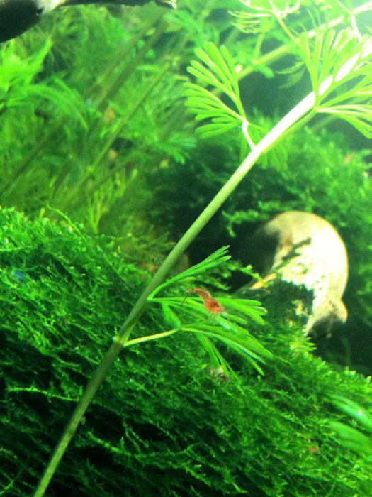 Mon Scaper's Tank 50L Aquascaping - Page 2 536442IMG0494