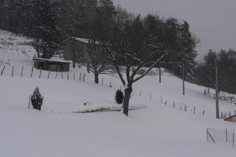 Mon Bassin / Etang de 20m par 6 environ en fin d'hiver 536709IMGP9142