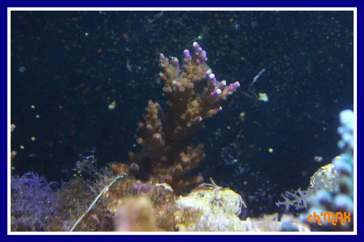 ce que j'amène en coraux a orchie  544790PXRIMG0043GF