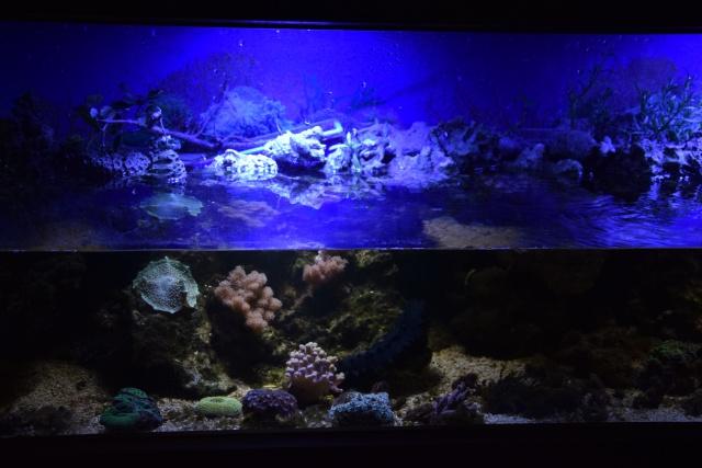 Le nouveau bac du Poissonpané : aquaterrarium de 900L / Nouvelle Calédonie - Page 2 544952DSC0079