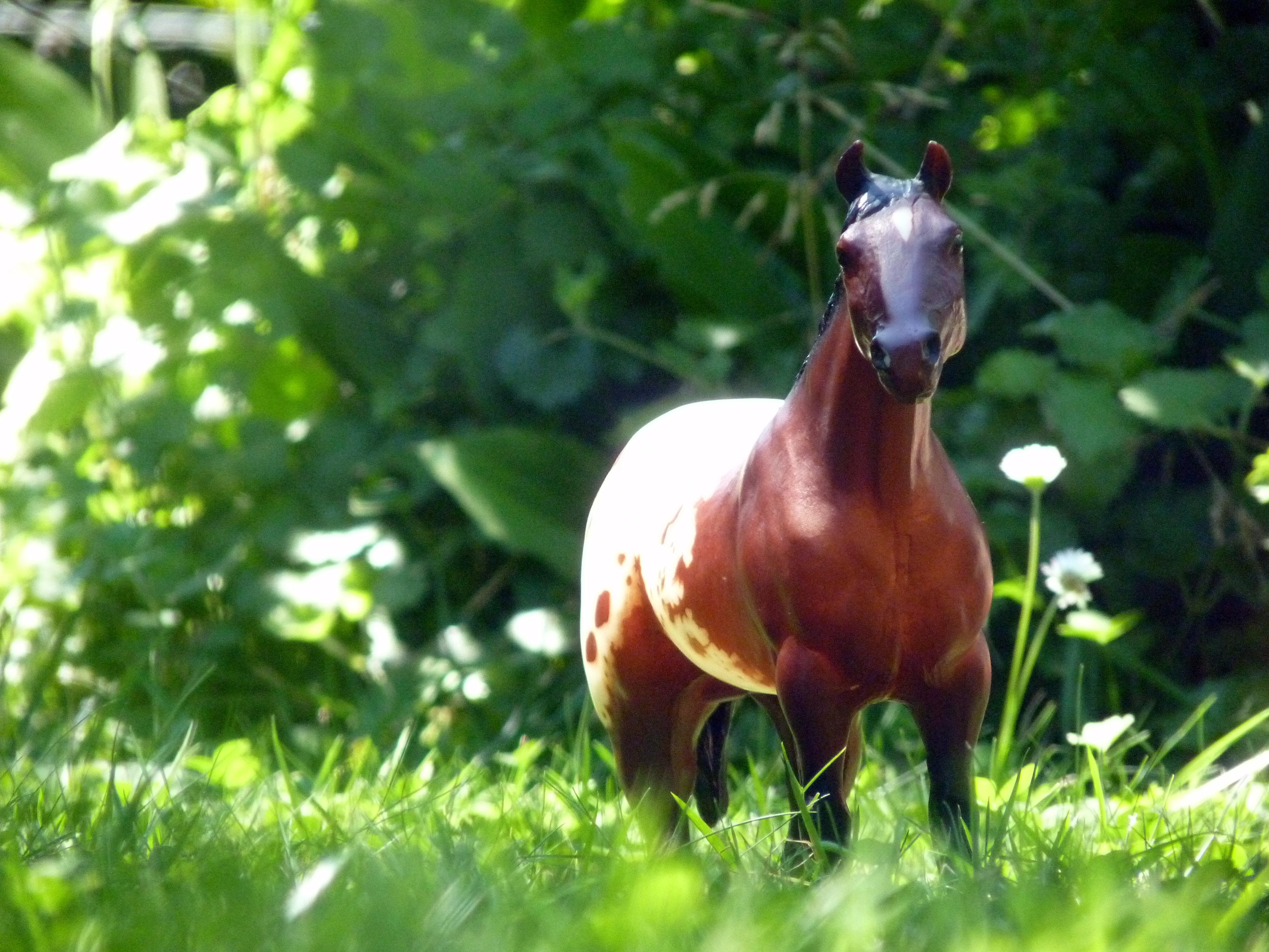 les chevaux de l'écurie Du vieux porche, bienvenue dans ce refuge miniature - Page 2 546282P1060525