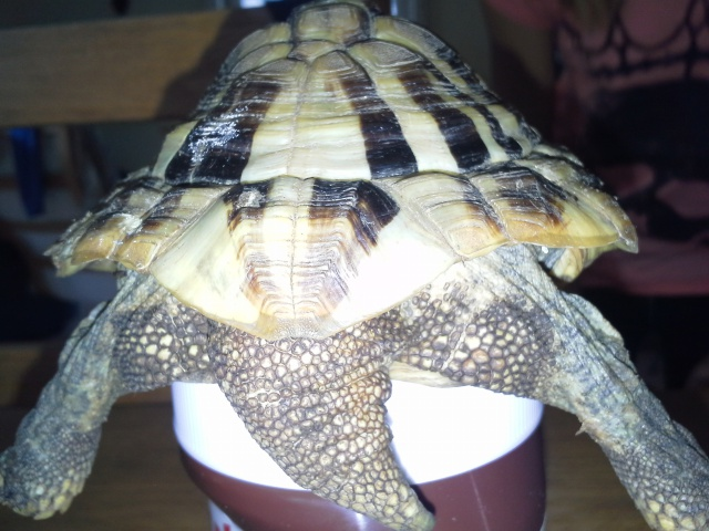 Identification de tortue terra 546461201407051211001