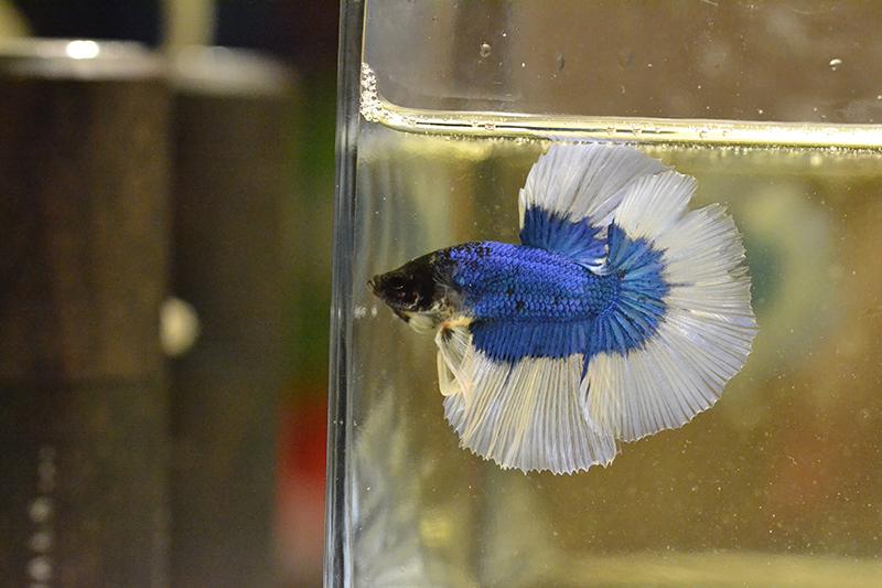 Un nouveau, BF bleu 548710DSC0740