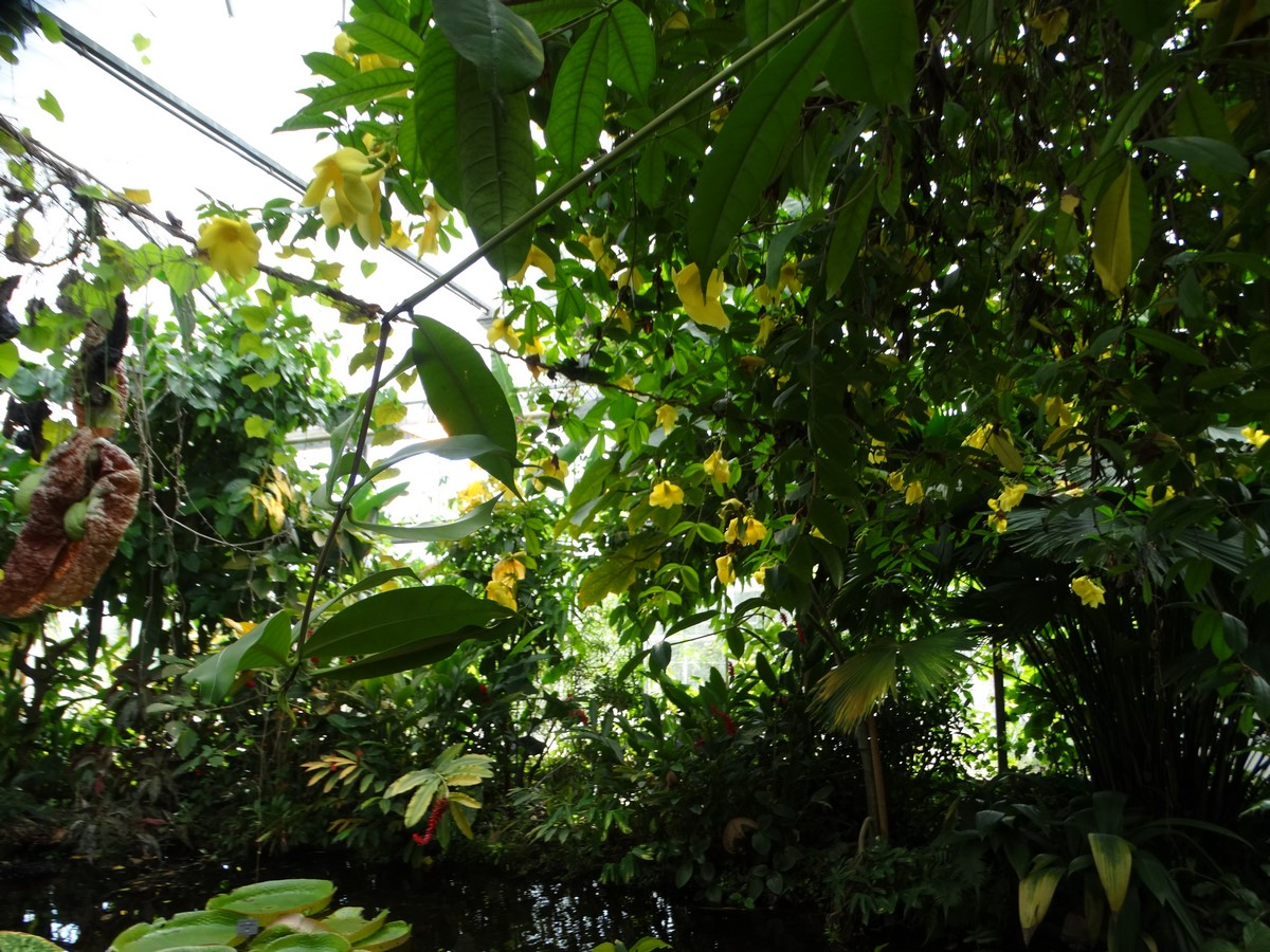 [Fil ouvert] Fleurs et plantes - Page 6 549364055Copier