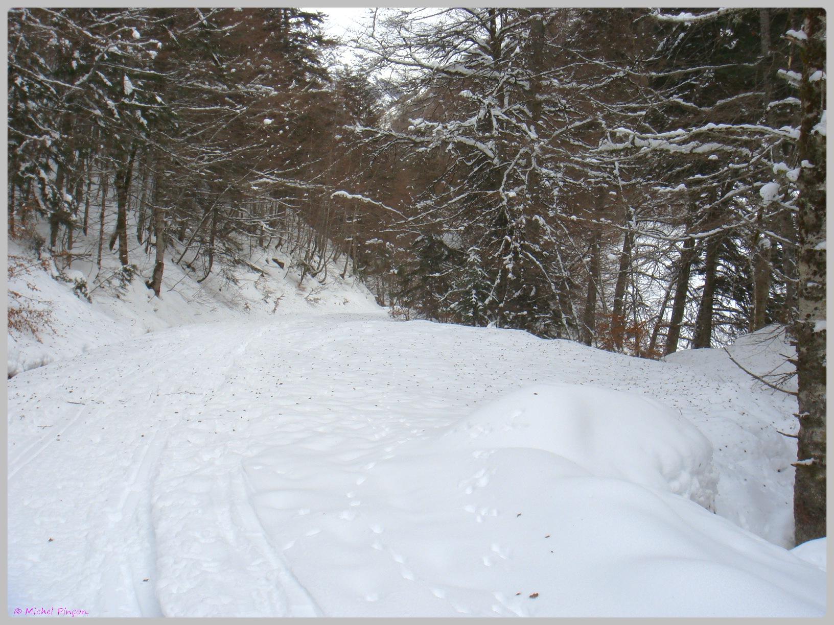 Une semaine à la Neige dans les Htes Pyrénées - Page 2 549464DSC011868