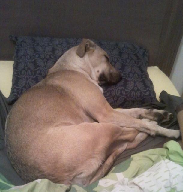 Lila, adorable chienne croisée, née en octobre 2011 551847Lila