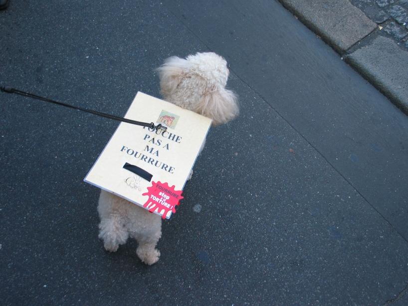07 - Marche contre la fourrure - Paris 19 novembre 2011. 553609IMG6554
