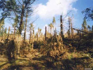Tempêtes de Décembre 1999:  Ouragans, ou arme climatique? 555309Foret1