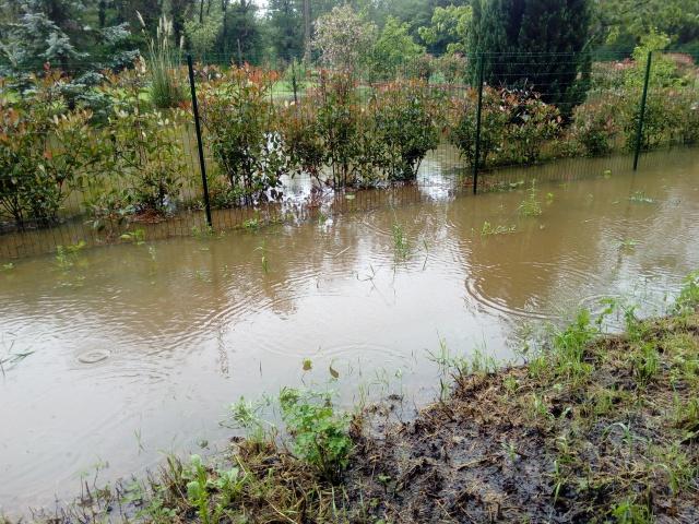 inondation :mes veilles sauvées de justesse ! 5559717001