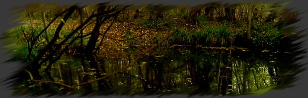 Le Marais Sombre