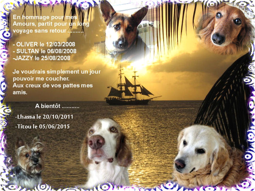 HOMMAGE pour mes Sept chiens 558538hommagepourmes5chiens2