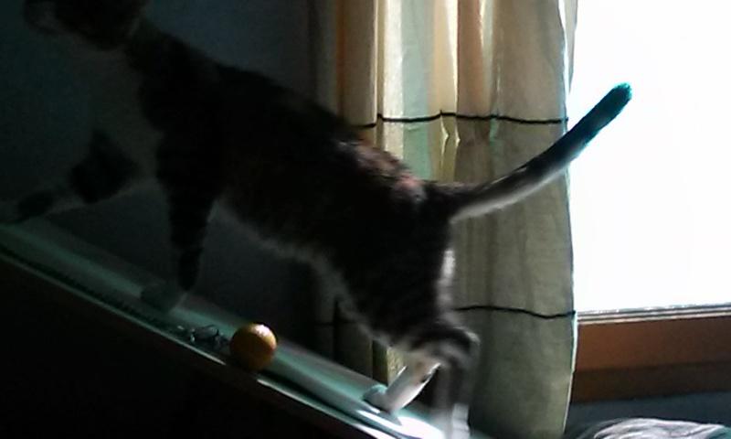 DUCHESSE - chatte femelle, née 2011/2012, borgne - (PASCANI) - adoptée par Chantal Pascal (dpt 63) - Page 4 55935372