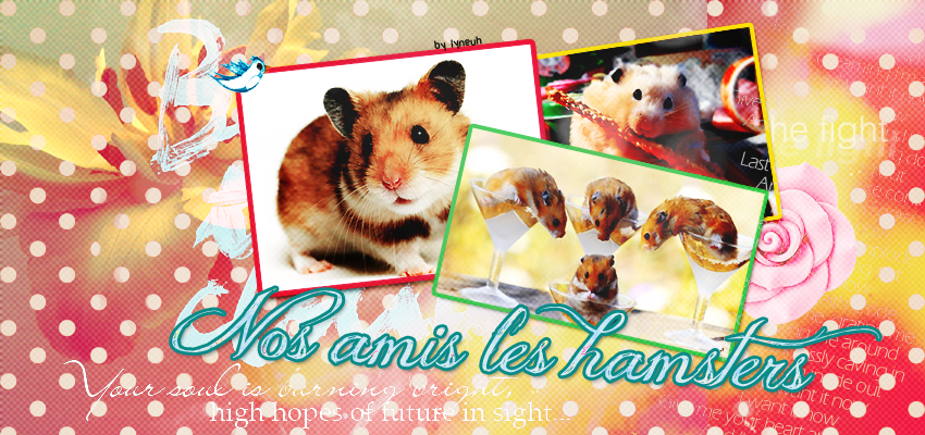 Nos amis les hamsters