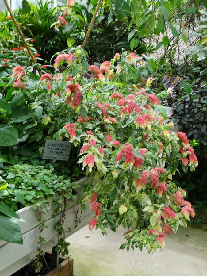 [Fil ouvert] Fleurs et plantes - Page 6 568218139Copier