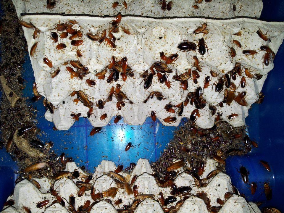 Elevage d'insectes en photos... Pourquoi pas?! 5706814515