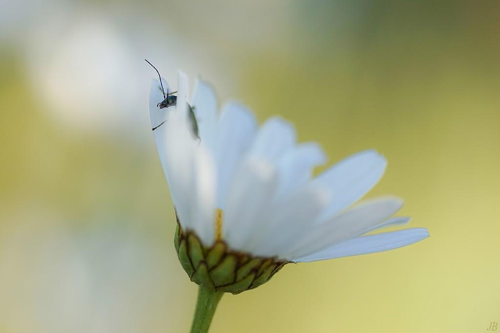 les insectes en PACA ( camaroney ) - Page 12 576005DSC009751024