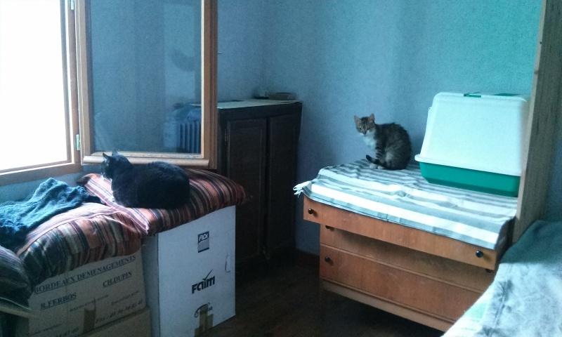 DUCHESSE - chatte femelle, née 2011/2012, borgne - (PASCANI) - adoptée par Chantal Pascal (dpt 63) - Page 3 5763994642