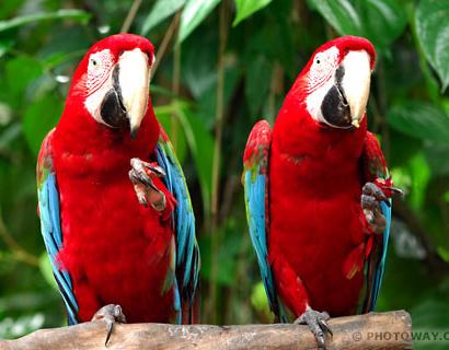 Tubes rapasse et oiseaux 578945Mellmelgibson1e17
