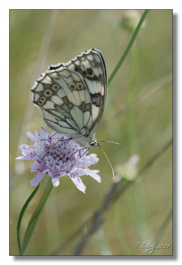 Fil ouvert - Proxi - Papillons - Page 2 580754macro7