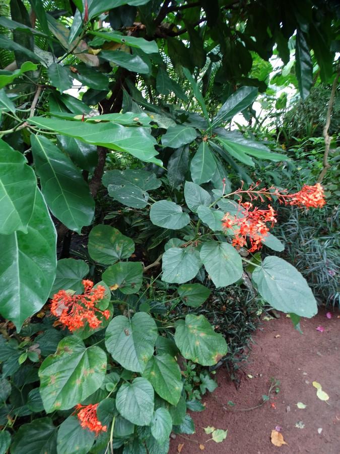 [Fil ouvert] Fleurs et plantes - Page 6 585049051Copier