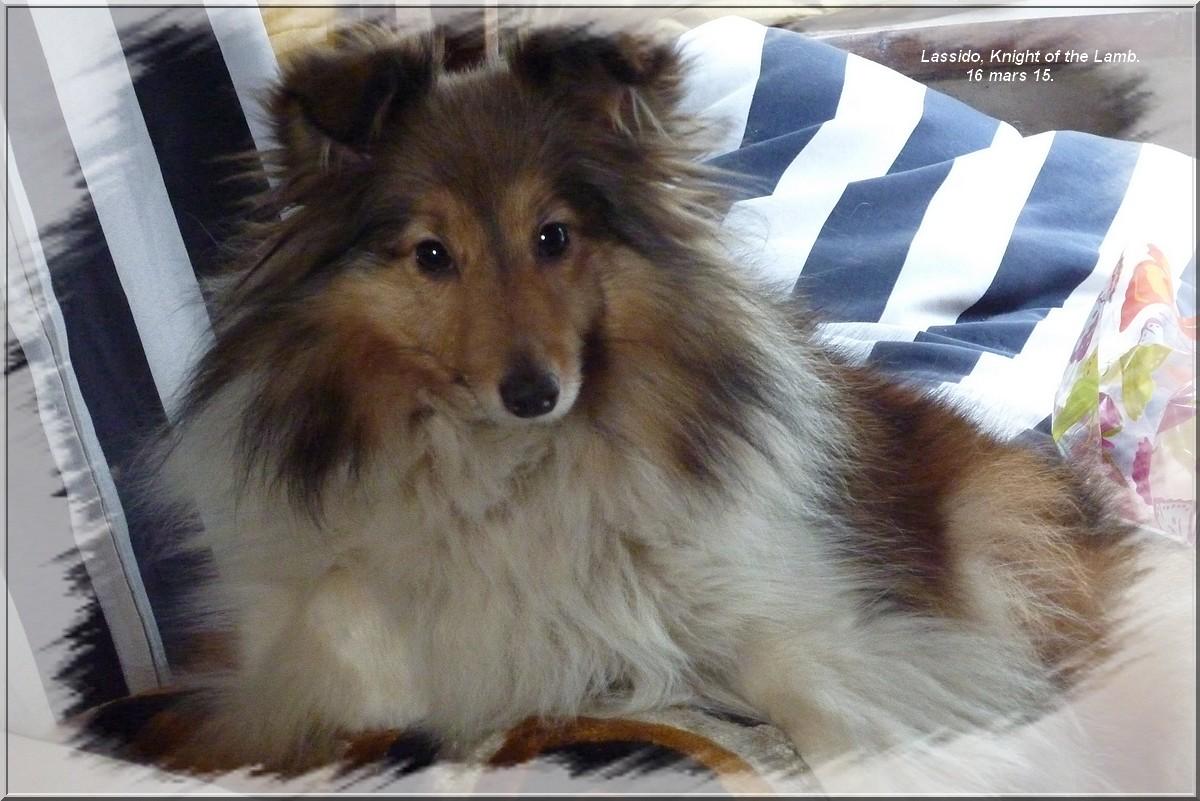 Mes chiens en 2015. 586724Lassido002